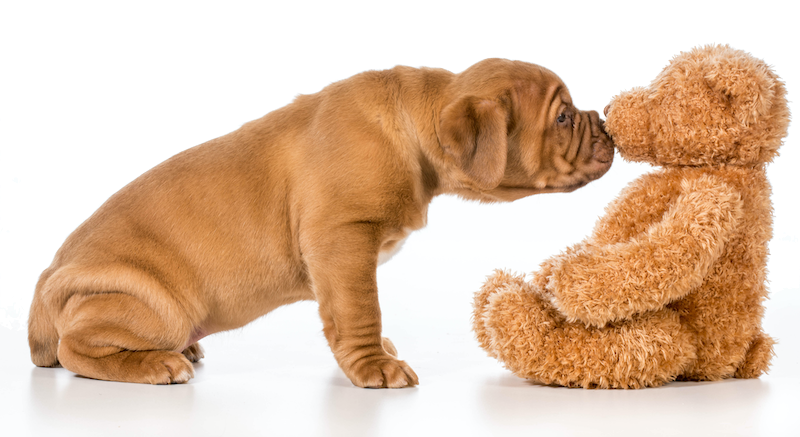puppy and teddy bear